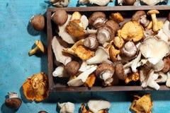 Abtropfbrett mit Vielzahl von rohen Pilzen auf Tabelle Lizenzfreie Stockfotografie