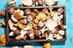Abtropfbrett mit Vielzahl von rohen Pilzen auf Tabelle Stockfotos