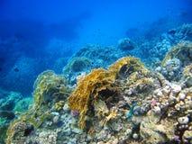 abu珊瑚dabab红色礁石海运 库存照片