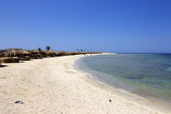 Abu dabbab south red sea egypt Royalty Free Stock Image