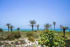 Abu Dhabi In de zomer van 2016 De beschermde oase op het hotel St Regis Saadiyat Island Resort Royalty-vrije Stock Foto