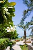 Abu Dhabi In de zomer van 2016 De groene oase op het hotel St Regis Saadiyat Island Resort Mooie roze bloeiwijze Royalty-vrije Stock Afbeeldingen