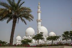 Abu Dhabi, Moschee Stockfotografie
