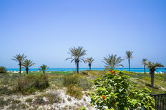 Abu Dhabi No verão de 2016 Os oásis protegidos no St Regis Saadiyat Island Resort do hotel Foto de Stock Royalty Free