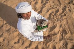 Man posing with his trained falcon. Abu Dhabi, UAE - Dec 15, 2017: Man in a traditional emirati dress proudly posing with his trained show falcon Royalty Free Stock Photos