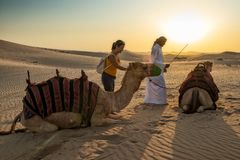 ABUDHABI/UAE - 13DEZ2018 - Camels in the desert of Abu Dhabi with their trainer and woman tourist. UAE royalty free stock image