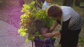 Abuela con los nietos que caminan en el parque almacen de video