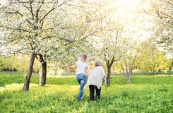 Abuela mayor con la muleta y la nieta en naturaleza de la primavera Foto de archivo