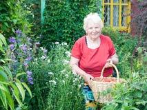 Abuela que muestra la cesta con las fresas Foto de archivo libre de regalías
