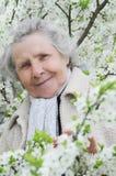 Abuelita en el fondo de las flores blancas fotografía de archivo