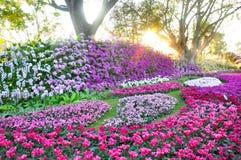 A abundância do jardim das flores arredondou-se por árvores no por do sol Imagem de Stock