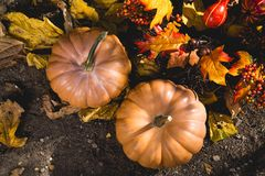 Abundance, Autumn, Fall, Farm Stock Image
