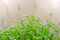 Abundance of blooming wild flowers. On the meadow at spring time Royalty Free Stock Images