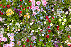 Abundance of blooming wild flowers on the meadow at spring time. Top view Royalty Free Stock Photos