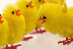 Abundance of easter chicks, selective focus Royalty Free Stock Photo