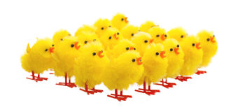 Abundance of easter chicks, selective focus Stock Image