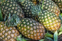 Abundance fresh juicy pineapple fruit background in yellow and green selling in local market. Abundance fresh juicy pineapple t background in yellow and green Stock Photography