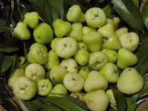 Abundance of water apples. Abundance of fresh water apples Stock Images
