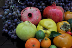 Abundance of fruits. Great abundance of autumn  fruits Stock Photos