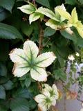 Abundance of greenery. Full sun Royalty Free Stock Photography