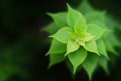Abundance. Growth pattern of green leaves Stock Photo