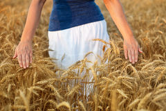 Abundance in life concept. Woman walking through wheat field touching the spikes royalty free stock photos