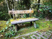 Abundance mossy chair in the park outdoor. stock photo
