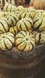 Abundance of pumpkins Stock Image