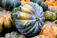 Abundance. Pumpkins and gourds piled high for purchase Stock Photos