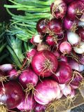 Abundance of red onion bulbs Stock Image