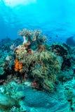 Abundance reef and marine life in Wakatobi National Park, Indone. Sia Royalty Free Stock Photography