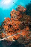 Abundance reef and marine life in Wakatobi National Park, Indone. Sia Royalty Free Stock Image