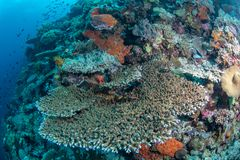 Abundance reef and marine life in Wakatobi National Park, Indone Stock Photos