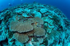 Abundance reef and marine life in Wakatobi National Park, Indone Stock Image