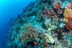 Abundance reef and marine life in Wakatobi National Park, Indone. Sia Stock Photo