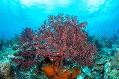 Abundance reef and marine life in Wakatobi National Park, Indone. Sia Stock Photos