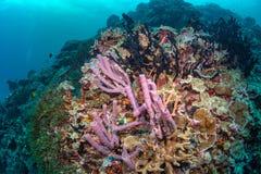 Abundance reef and marine life in Wakatobi National Park, Indone. Sia Royalty Free Stock Photo