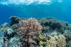 Abundance reef and marine life in Wakatobi National Park, Indone. Sia Stock Images