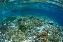 Abundance reef and marine life in Wakatobi National Park, Indone. Sia Stock Photography