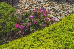 The abundance of tropical plants in the garden.  Stock Photo