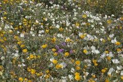 Abundance of wildflowers Stock Photography
