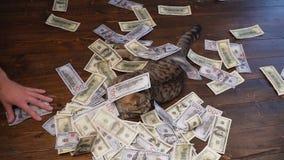 Abundancia inesperada Mucho dinero cae en el gato almacen de metraje de vídeo