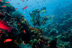 Abundant in fish Indonesian sea. Close to the Komodo island royalty free stock photos