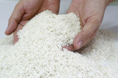 Abundant rice supply Stock Image
