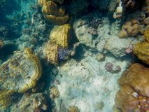 The abundant of shallow coral reefs in the Southern of Thailand, where is home to many small colorful fishes and marine animals. The abundant of shallow coral royalty free stock photos
