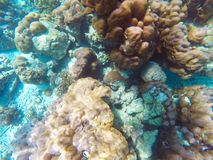 The abundant of shallow coral reefs in the Southern of Thailand, Stock Photography