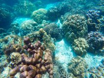 The abundant of shallow coral reefs in the Southern of Thailand, Stock Image
