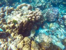 The abundant of shallow coral reefs in the Southern of Thailand,. The abundant of shallow coral reefs that is the habitat of small marine animals, in the Royalty Free Stock Images