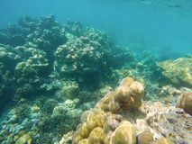 The abundant of shallow coral reefs in the Southern of Thailand, where is home to many small colorful fishes and marine animals. The abundant of shallow coral royalty free stock photography