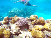 The abundant of shallow coral reefs in the Southern of Thailand, where is home to many small colorful fishes and marine animals. The abundant of shallow coral royalty free stock photo